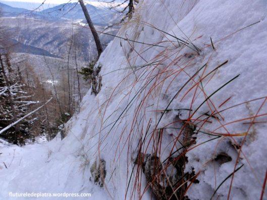 muntii bucegi iarna
