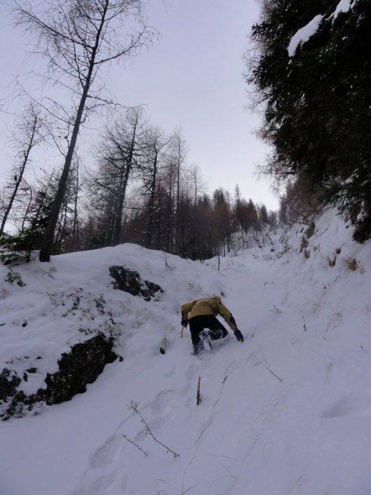 la panda brana aeriana iarna