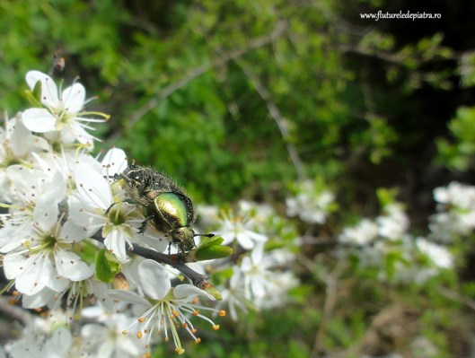tree flower, freyr nature