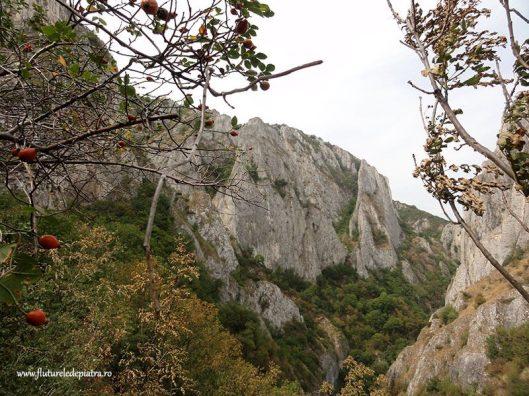 climbing Romania cheile turzii