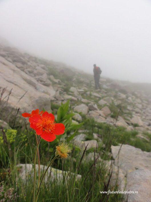 traseu de trekking Vihren, Bulgaria