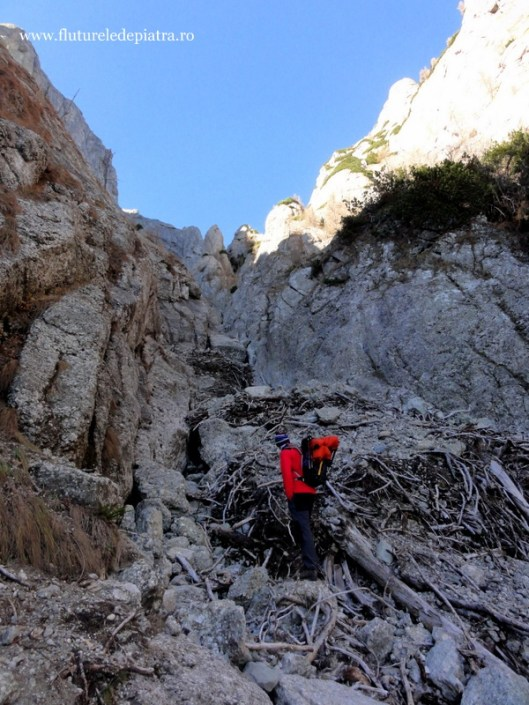 rămăşiţe bolovan Valea Gălbinele