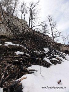 copaci carbonizati muchia cu zimbri
