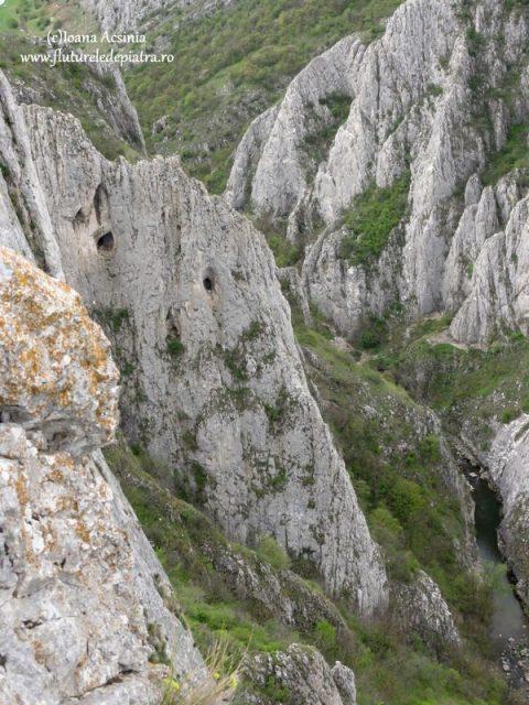 alpinis cheile turzii