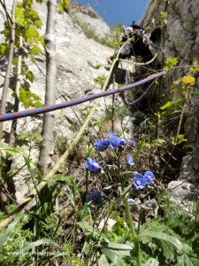 alpinisti cheile turzii