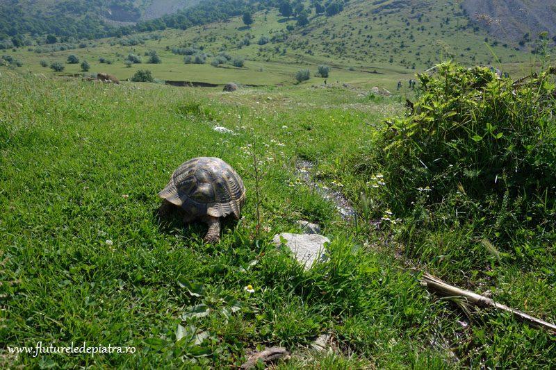 fauna muntii macin