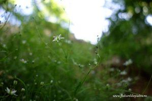 flora doborgea, romania