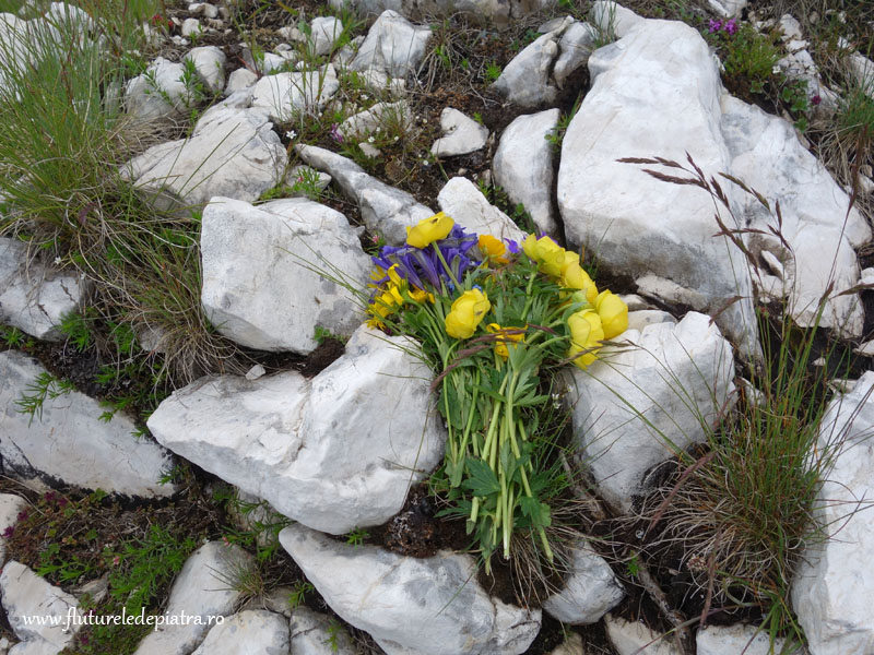 vandalism piatra craiului