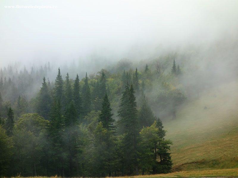 pădure în cețuri, Munții Ciucaș, carpatii romaniei