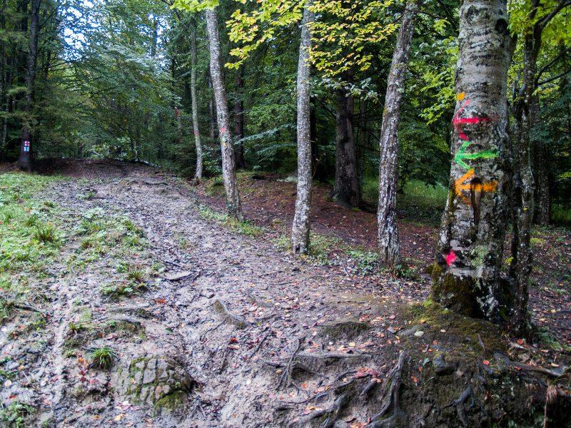 marcaje coloare de la maratonul Ciucaș, împânzind pădurile