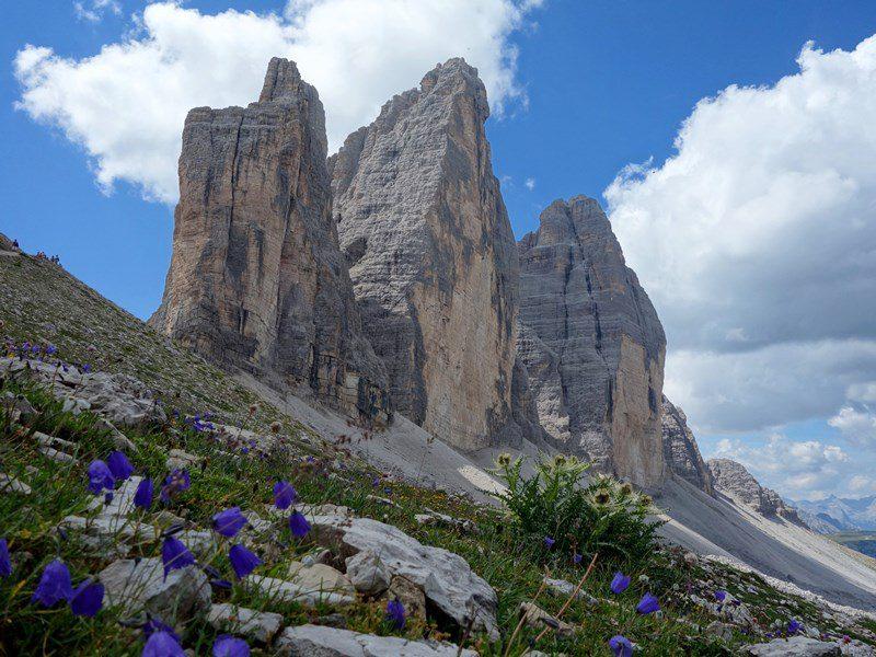 Tre Cime di Lavaredo printre flori. istorie alpină de la fața locului