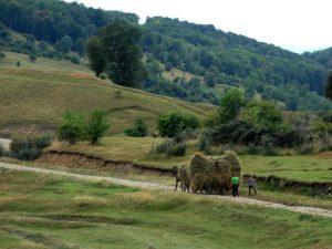 căruță plină cu fân, satul Secăreni, peisaj rural, obiceiuri romanesti