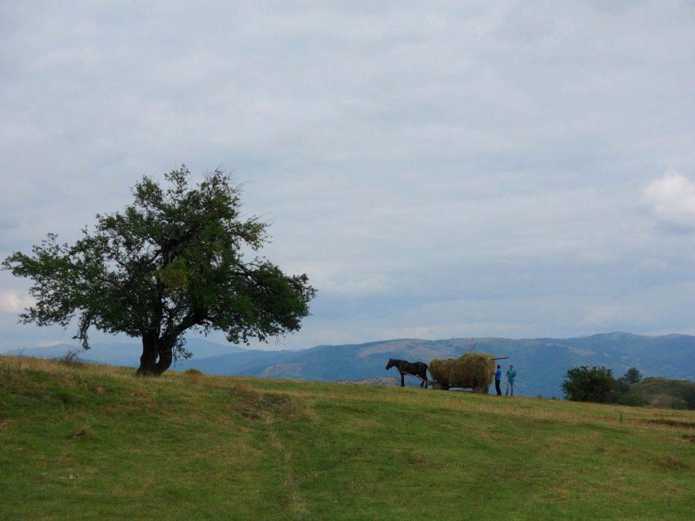 peisaj rural: căruță încărcată cu fân