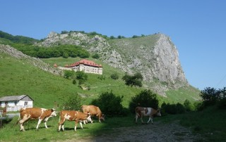 Cheile Aiudului - pereți de cățărare și fauna locală
