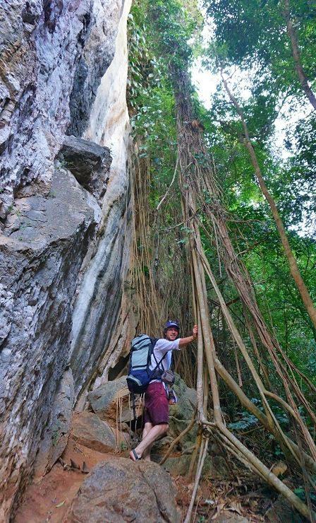 liane și vegetație pe lângă faleze, railay, thailanda