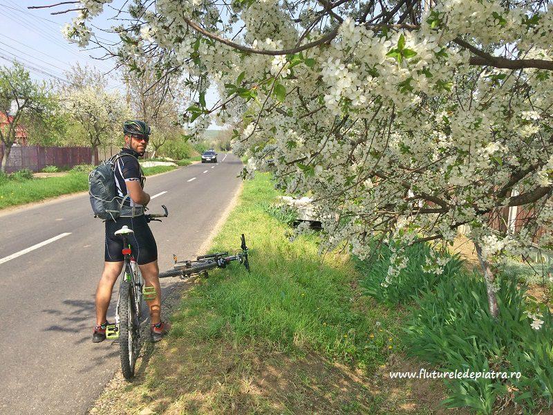 pomi înfloriți în localitatea Merei, Buzău, tiberiu buzdugan