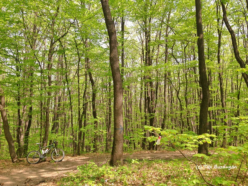 păduri prietenoase cu bicicletele, traseu XC race buzau
