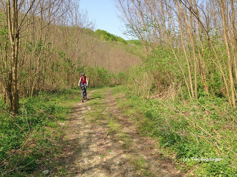 întoarcerea spre Sărata Monteoru, prin păduri mai mici, traseu bicicleta xc race buzau