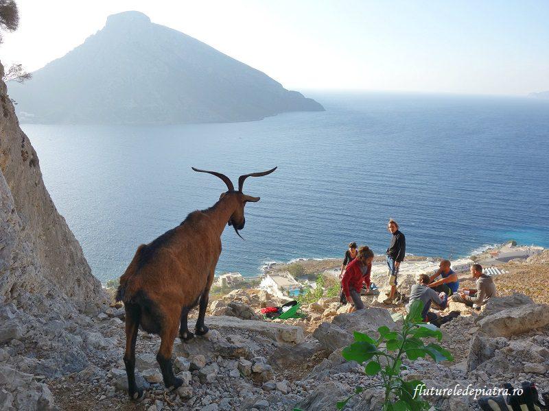 capra diabolică de lângă faleza Grande Grotta, Kalymnos, Grecia, escaladă
