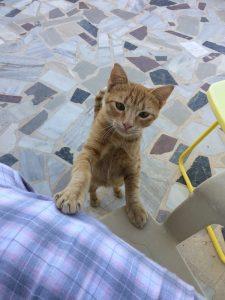 un mic rai al pisicilor, kalymnos