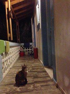 una dintre multele pisici care s-au îndrăgostit de Oana, aștepta cina, kalymnos