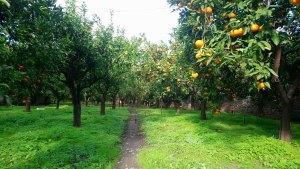 grădină de portocali și rodii, leonidio, Grecia