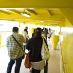 本当に黄色
