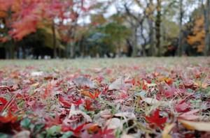小金井公園 紅葉1