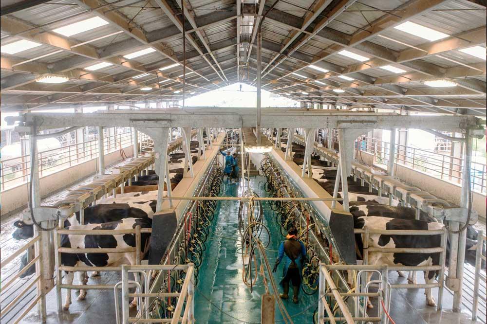 bigisland_dairy-2