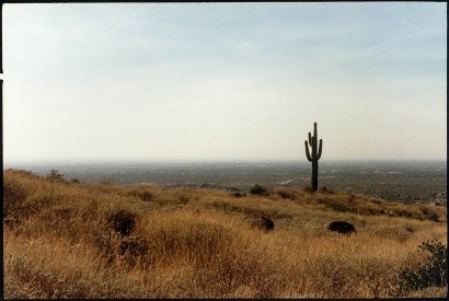 """""""Cactus Plain"""", 1997, Sonora desert, Arizona, Landscape/Light studies series, C–print"""