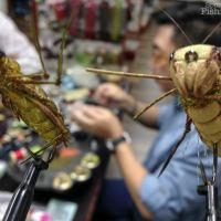 Learning Plenty of Tips, Tricks and New Patterns at the Fly Tying Workshop by Dron Lee