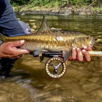 Thai Mahseer - Wet Weather and Aznir Strikes Gold