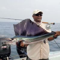 Juvenile Indo-Pacific Sailfish and Bad Weather