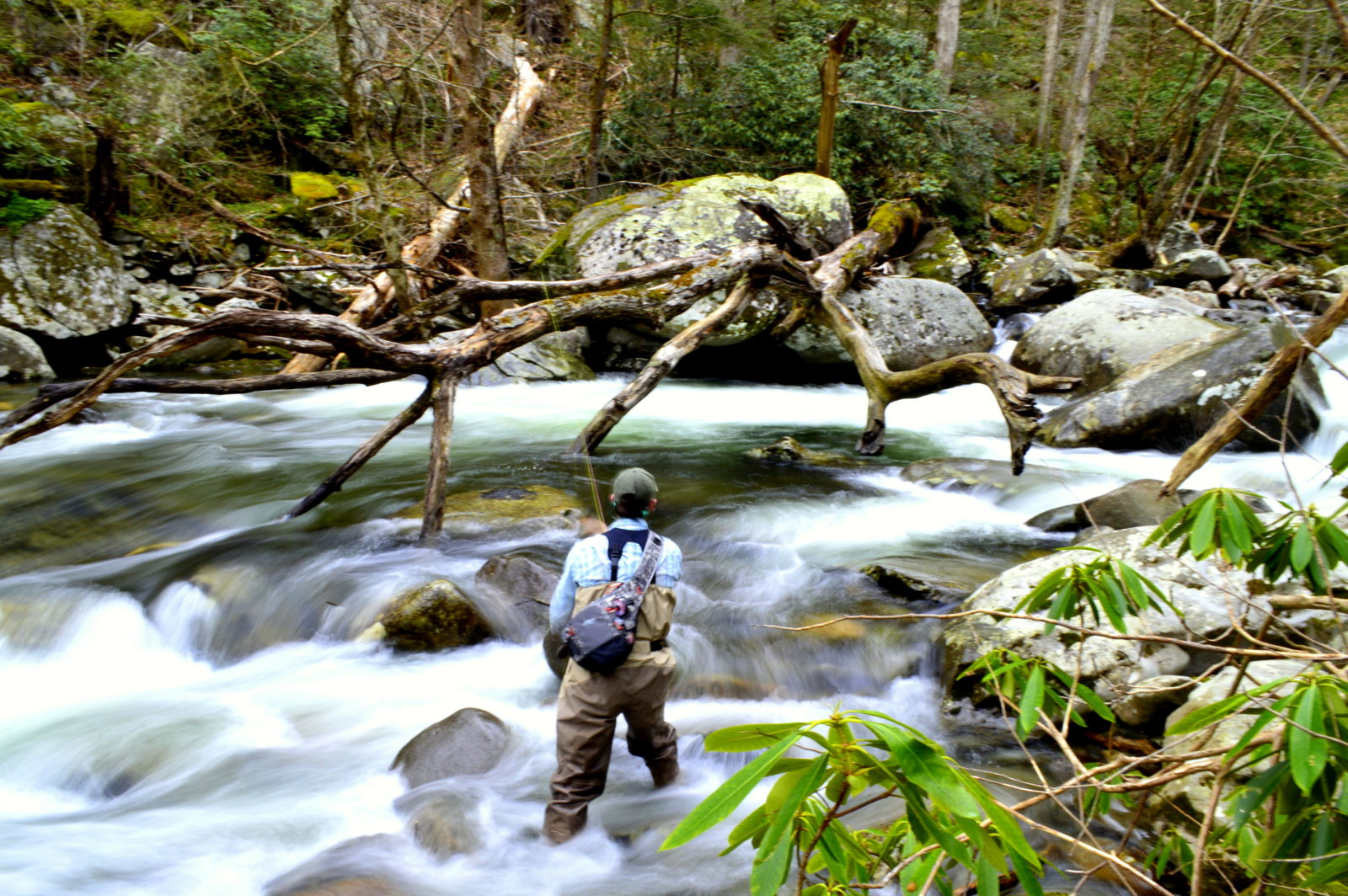 Fly fishing guides in the great smoky mountains of nc and tn for Smoky mountain trout fishing