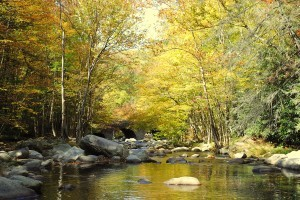 Fall Trout Fishing, Fall Trout Fishing Great Smoky Mountains National Park, Trout Fishing Guides Pigeon Forge Gatlinburg Cherokee Bryson City,