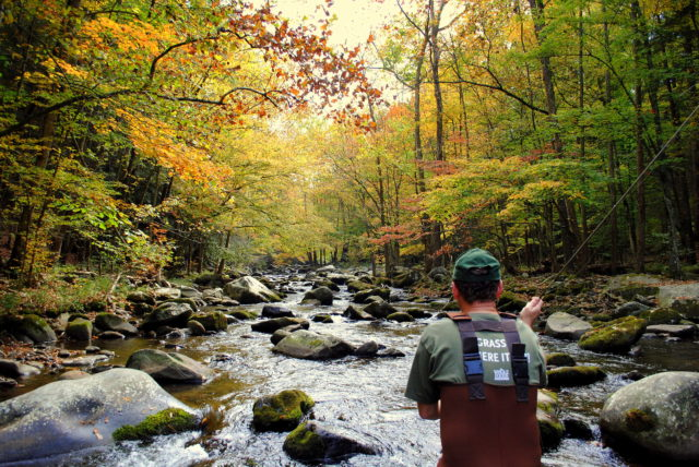 October Fly Fishing, Fall Fly Fishing Smoky Mountains, Fly Fishing the Smokies, Trout Fishing Guides in Smoky Mountains Gatlinburg Pigeon Forge Sevierville Tennessee