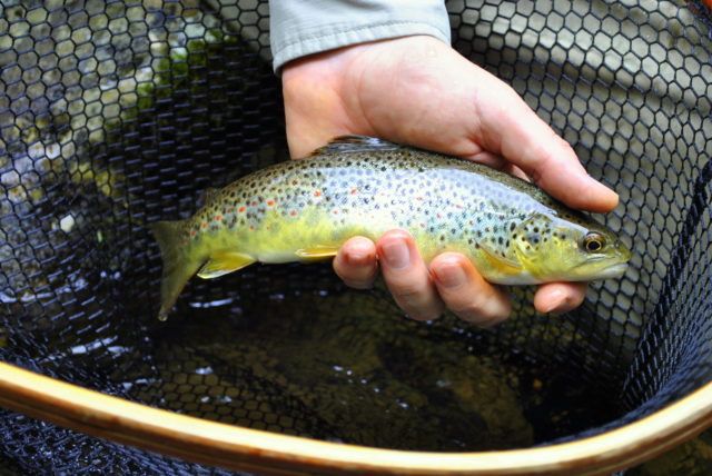 Great Smoky Mountains Fishing Report December 14th, Fly Fishing the Smokies