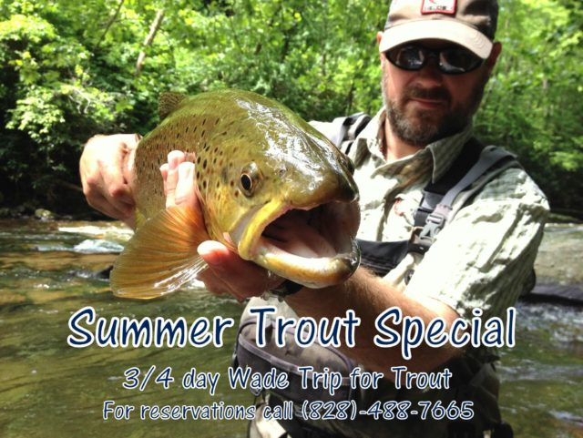 Summer Trout Special, Trout Fishing, Summer Trout Fishing, Fly Fishing the Smokies,
