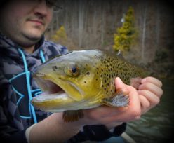 Wild Tuckasegee Brown Trout