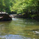 Wade Trips, Fly Fishing the Smokies, Smoky Mountain Fly Fishing, Smoky Mountain Fly Fishing Guides,