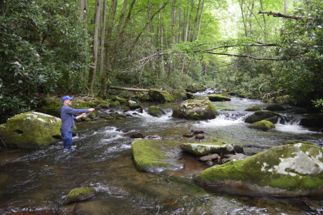 Summer Fly Fishing the Smoky Mountains, Fly Fishing the Smokies, Best Trout Fishing Guides in Smoky Mountains