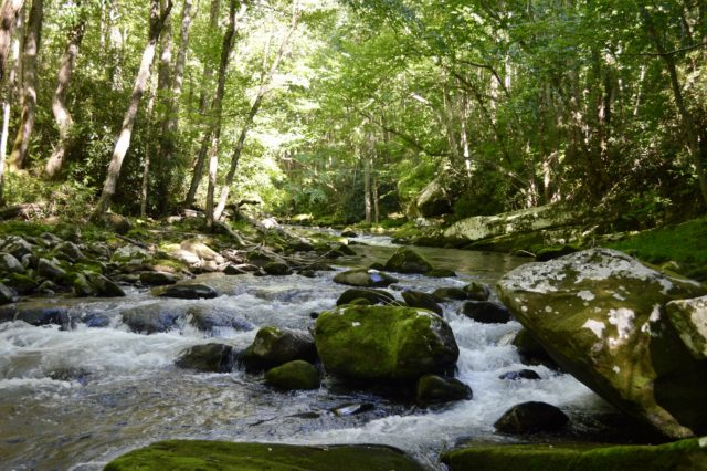 Great Smoky Mountains Fishing Report July 31st