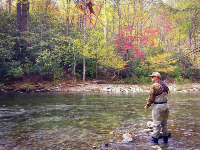 Fly Fishing the Smokies, Smoky Mountain Fly Fishing Guides, Great Smoky Mountains Fishing report October 4th