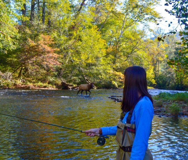 Elk Fly Fishing Cherokee, Fly Fishing the Smokies. Smoky Mountain Fly Fishing,