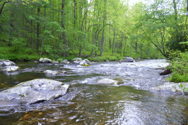 Hazel Creek Fly Fishing Report May, Fly Fishing the Smokies, Smoky Mountain Fly Fishing Guides,