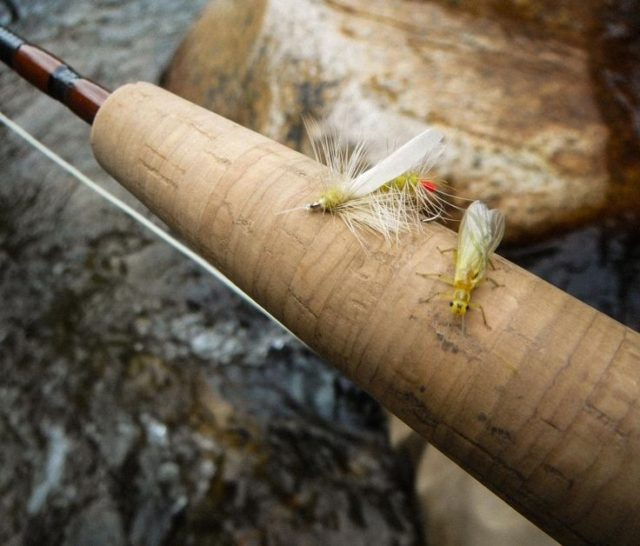 Fly Fishing the Smokies, Hazel Creek, Yellow Sallies, Hazel Creek Fly Fishing Report May 2018,