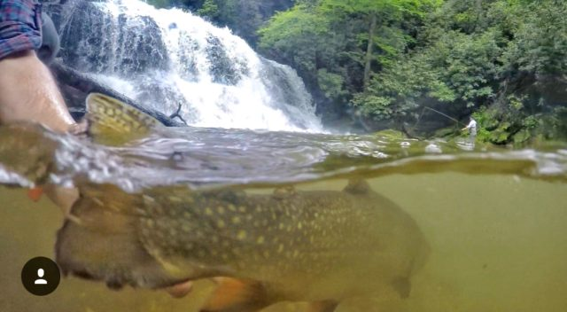 Fly Fishing the Smokies, Brook Haven Private Water,