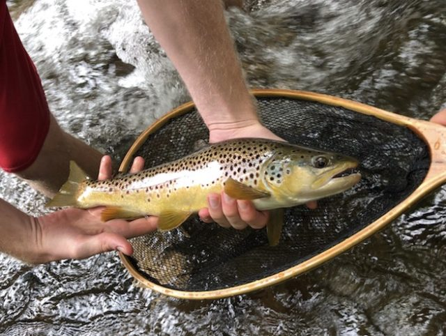 Great Smoky Mountains Fishing Report