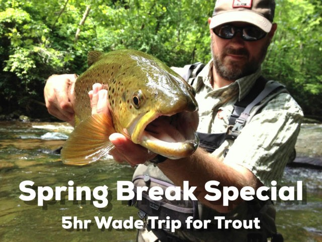 Spring Break Special, Fly Fishing Gatlinburg, Fly Fishing Bryson City, Cherokee Fly Fishing, Bryson City Fly Fishing, Fly Fishing Guides Great Smoky Mountains Gatlinburg Pigeon Forge Cherokee Bryson City Trout Fishing Guides