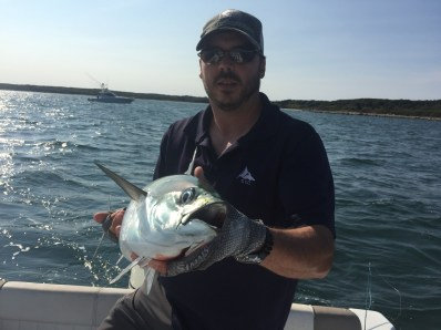 Cape Cod False Albacore